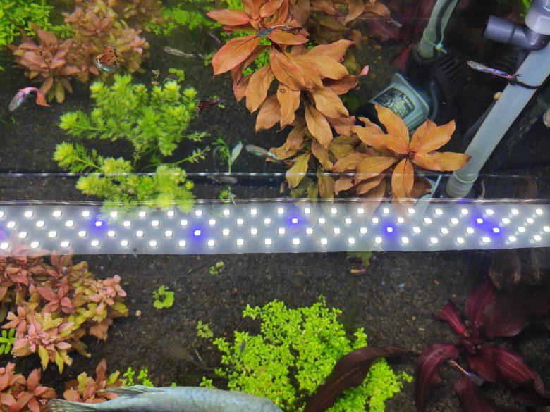 Hagen Fluval ROMA 90 и светильник для аквариумов ADE 500C